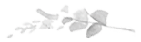 Imported P6 design file: 1470930259-Flora-Flowers-1.png